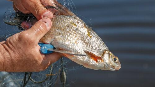 Мертвая рыба и нефтяные пятна: инспекторы Минэкологии РТ развеяли фейки в соцсетях