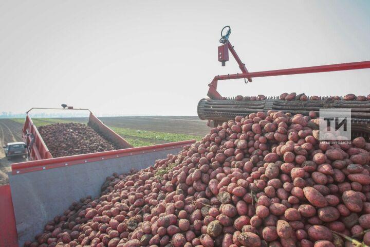 В Татарстане в этом году планируют произвести сельхозпродукцию на 240 млрд рублей