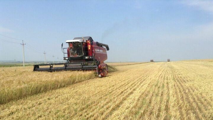 Уборка озимой пшеницы в Аксубаевском районе близится к завершению
