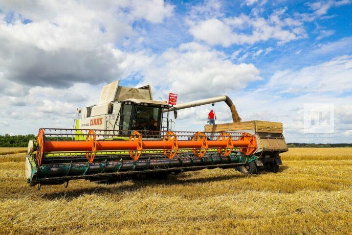 Минниханов своздуха оценил темпы уборки урожая вЧистопольском районе