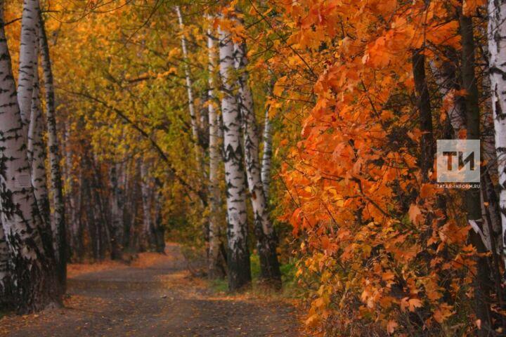 Юрий Переведенцев: «До конца октября в Казани сохранится аномально теплая погода»