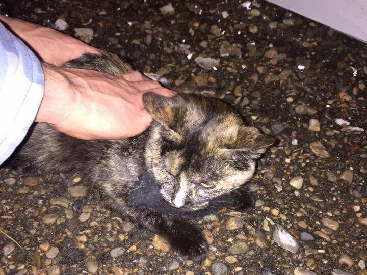 УФСИН опубликовал видео погони за кошкой-наркокурьером в Татарстане