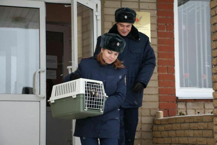 Кошку-наркокурьера, задержанную на территории колонии в РТ, передали в приют