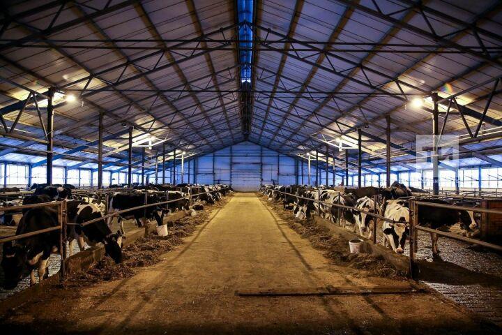 В Лениногорском районе животноводов обучили профилактике заболеваний скота в хозяйствах