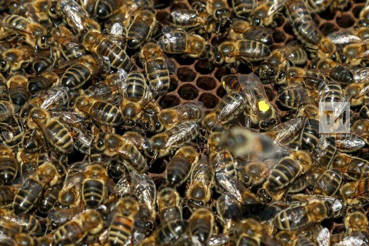 Пчеловоды Татарстана жалуются на массовую гибель пчел на пасеках