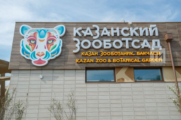 Казань надеется бесплатно получить от Европейской ассоциации зоопарков шимпанзе и горилл