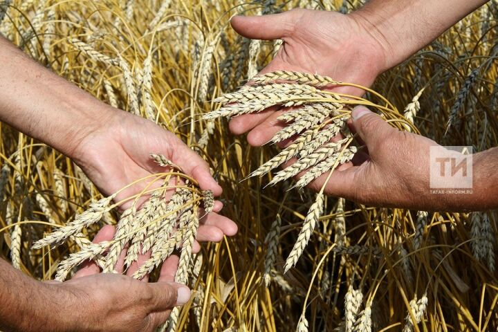 В Татарстане с начала уборочных работ намолочено 3 млн тонн зерна нового урожая