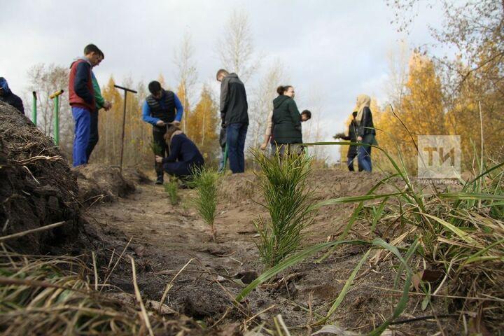 За «Неделю леса» в Татарстане будет посажено 1,5 млн штук саженцев ели, березы и дуба