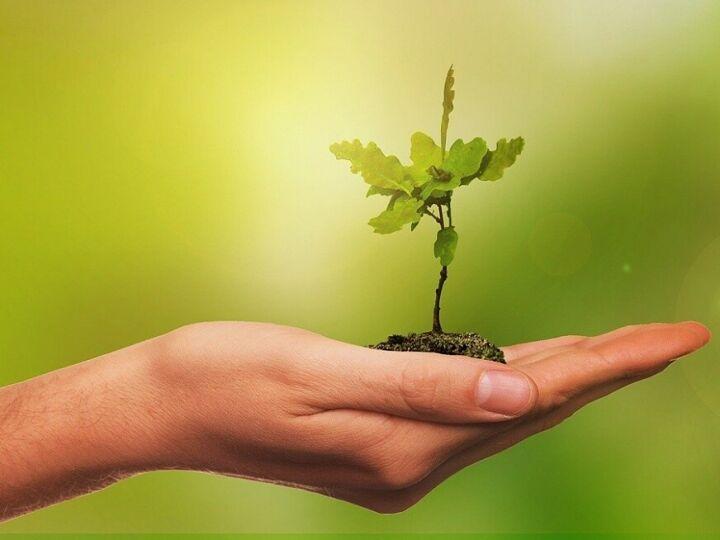 Нижнекамский проект «Родился ребенок – посади дерево» выиграл 250 тысяч рублей