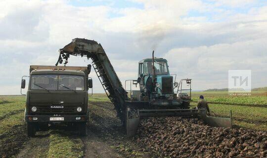 В Татарстане для сдерживания цен увеличат площади сахарной свеклы