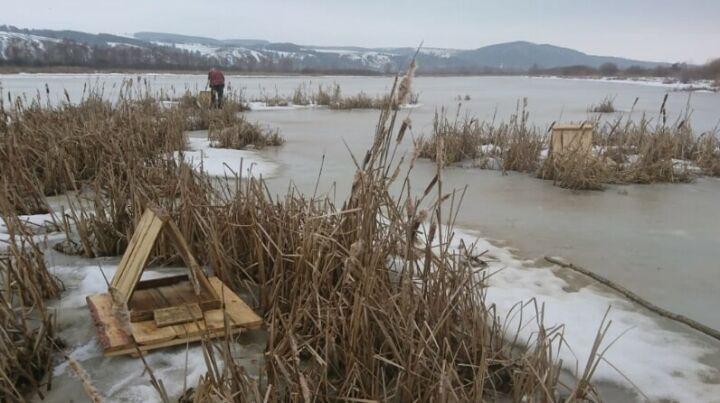 Искусственные гнездовья для водоплавающих птиц начали устанавливать в Татарстане