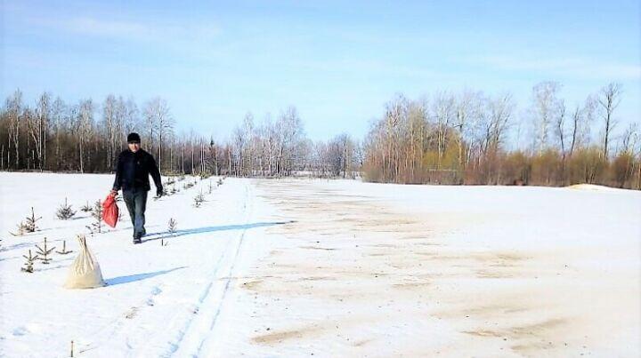 В лесных питомниках Татарстана начали работы по «чернению снега»