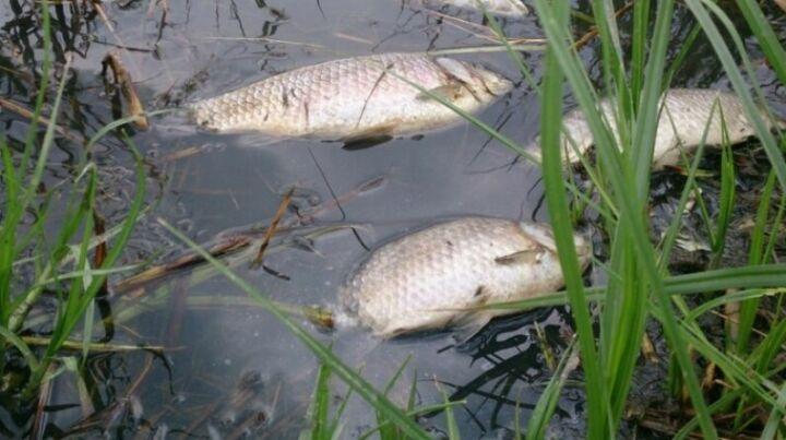 На реке Меше в Лаишевском районе обнаружен замор рыбы