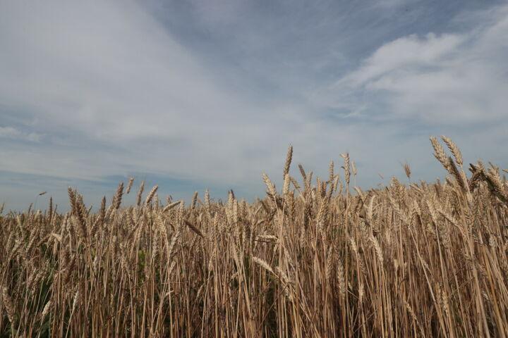 Госдума одобрила инициативу Госсовета РТ, касающуюся нарушений на сельхозземлях