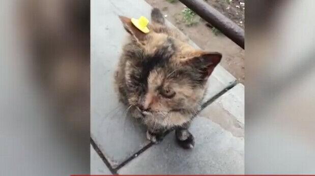 На улицах Нижнекамска появляется все больше чипированных кошек