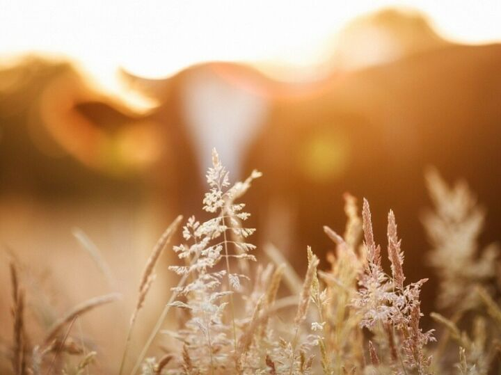 В Нижнекамском районе реализуется программа по утилизации биоотходов