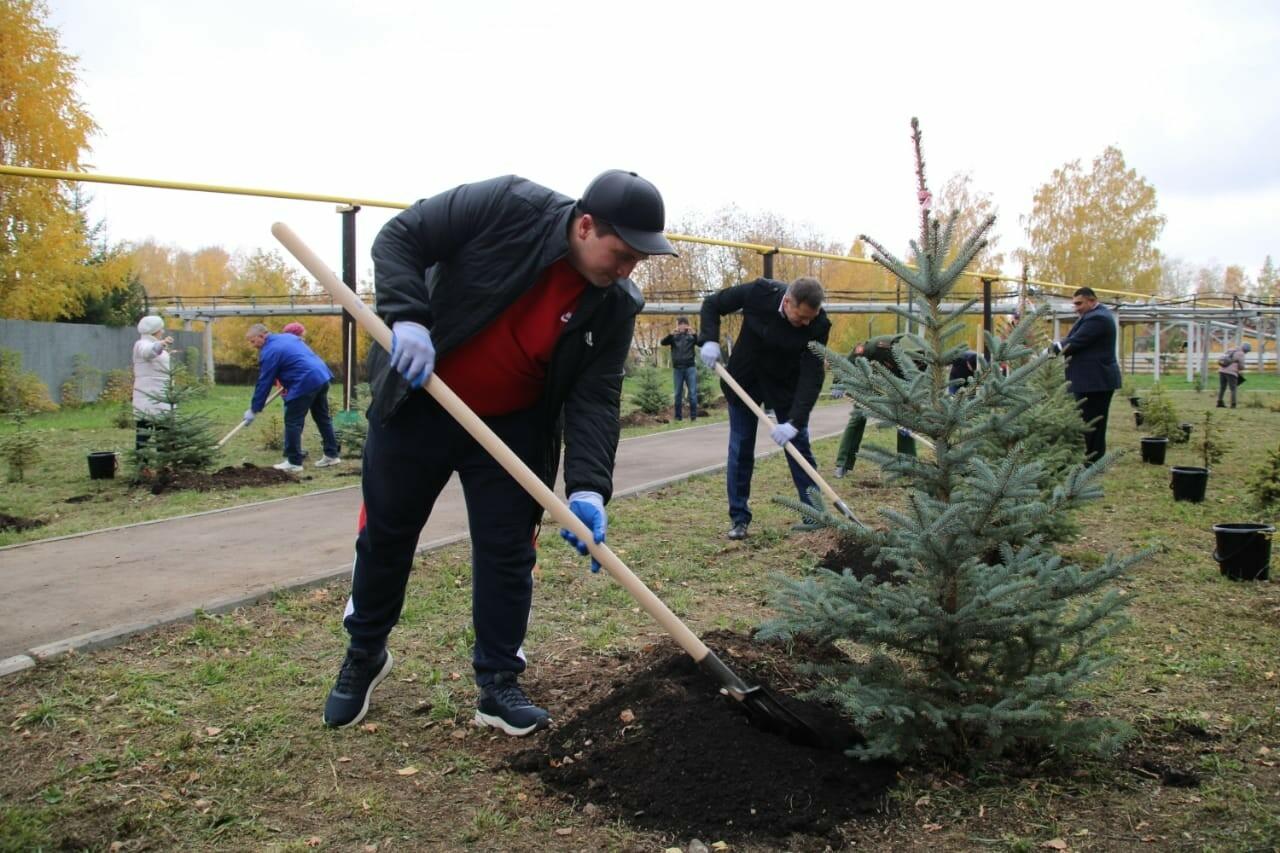 Менделеевск украсят 1,5 тыс. саженцев голубых елей, можжевельников, пихт и елей