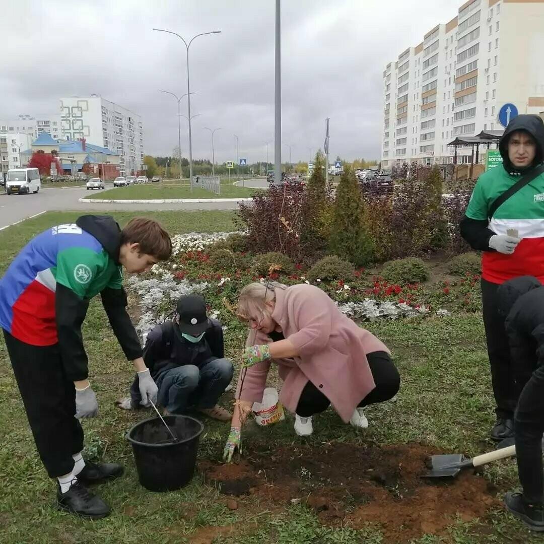 В Елабуге участники акции «Сохраним лес» высадят деревья на каждой улице города