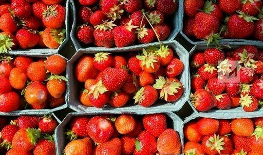 Госсовет РТ принял в I чтении законопроект о производстве органической продукции