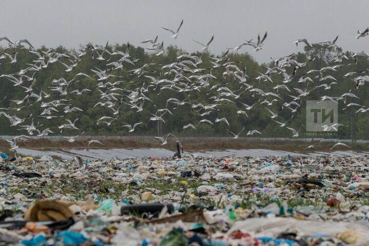 УК «ПЖКХ» приступила к проектированию в РТ экотехнопарков по переработке мусора