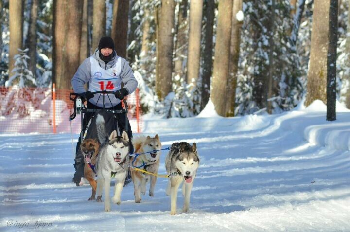Зеленодолец привез из Марий Эл два золота гонок на собачьих упряжках