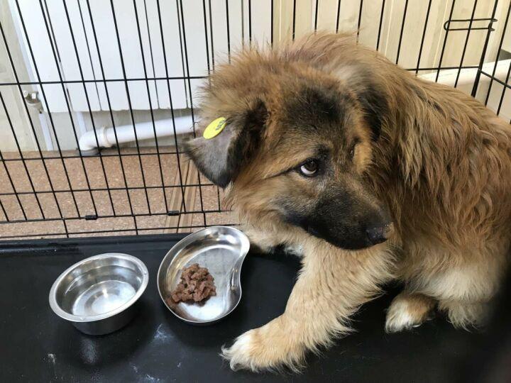 Он не готов жить в семье: пса, в которого стреляли из арбалета, вернули на улицу
