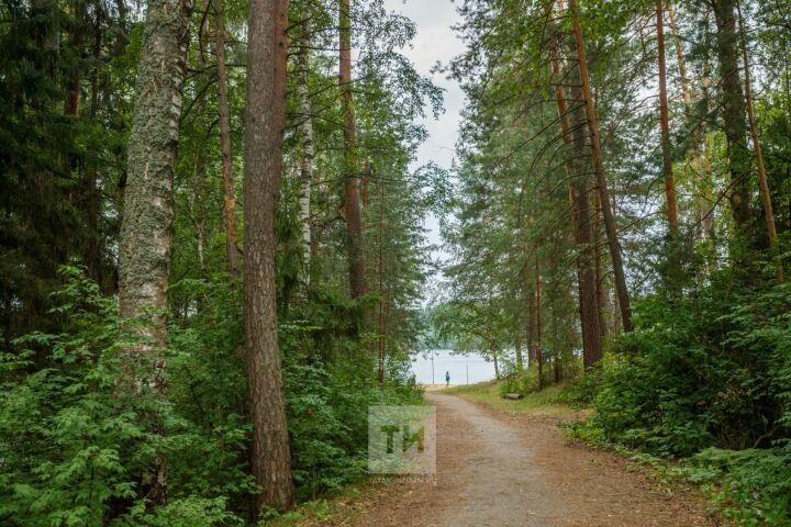 Костры, валежник и защита от клещей: Равиль Кузюров предупредил о запретах в лесах