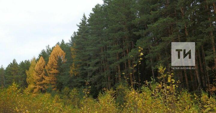 В Казани определят зеленые зоны, которые никогда нельзя будет застроить