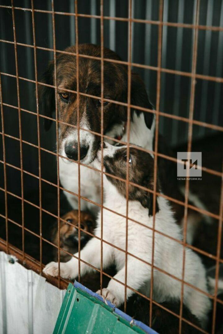 Айдар Метшин: Проект программы о бездомных животных направлен в Госсовет РТ