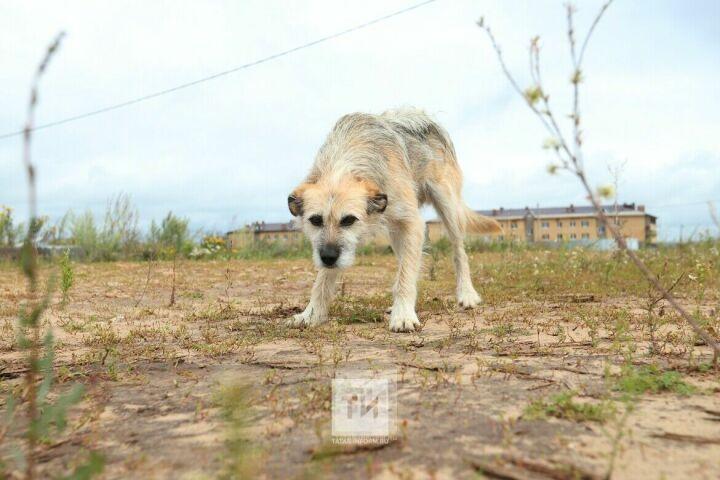 В Алексеевском районе РТ появится база данных о животных и их владельцах