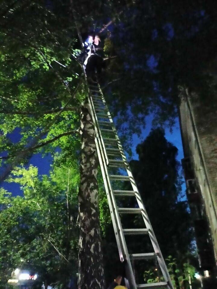 Спасатели пришли на помощь казанцу, который ночью забрался на дерево и не смог слезть