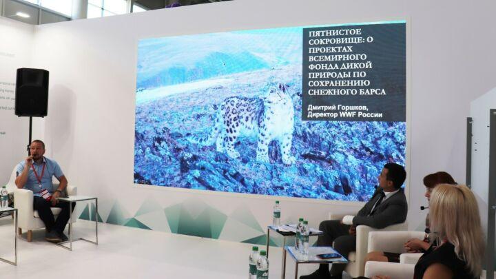 Участники KazanSummit 2021 обсудили сохранение снежных барсов