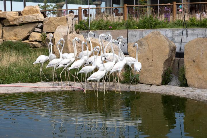 В казанском зоопарке «Река Замбези» поселились фламинго