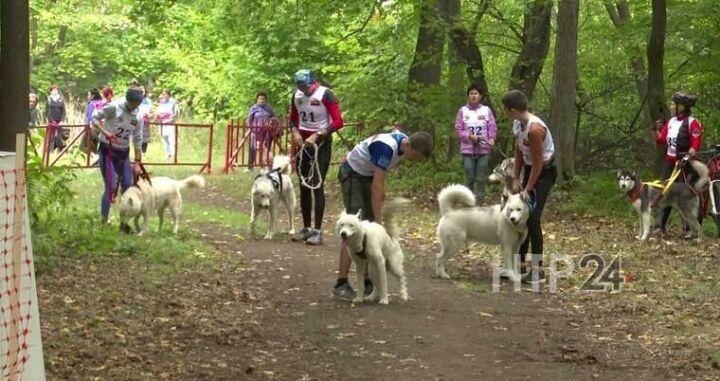 В Нижнекамске прошли гонки на собачьих упряжках на дистанции 5 км