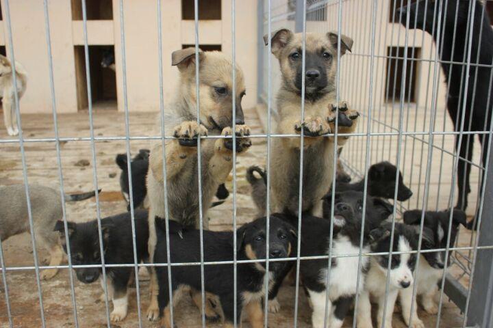 В Казани сотрудники «Метроэлектротранса» взяли щенков из приюта