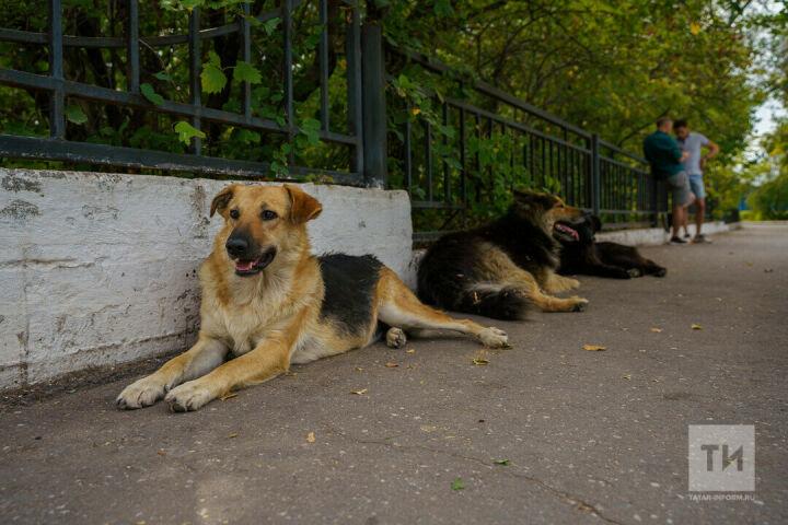 Жители Советского района Казани могут бесплатно вакцинировать и стерилизовать собак