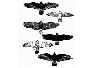 """...зимовать.  Сокол  """"берет """" птиц исключительно на лету"""